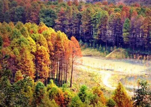【攻略】十一月国内最佳旅游地推荐 国内旅游圣地不容错过