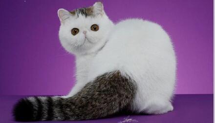 【干货】猫掉毛怎么办 三个针对猫咪掉毛的妙招帮你解决