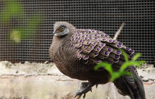 【完整版】村民捡鸟蛋孵出怪鸟担心携带病毒报警 结果一查傻眼了